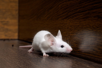 Get Rid Of Mice In Your Home Using Motion Detection Cameras