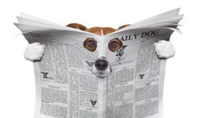 Dog spying through news paper